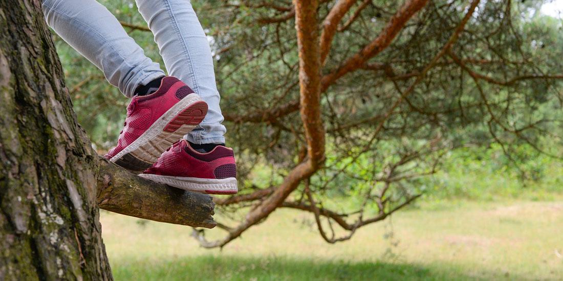 Кроссовки на дереве